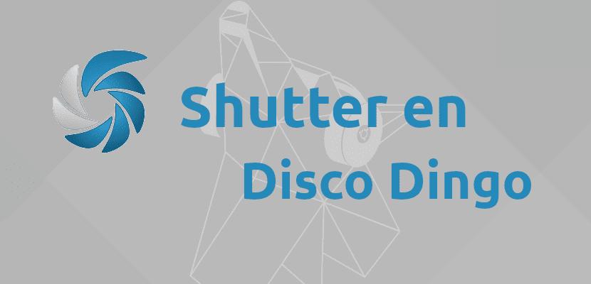 Shutter en Disco Dingo