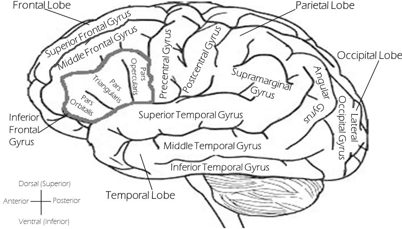 Analizando neuroimágenes con Linux