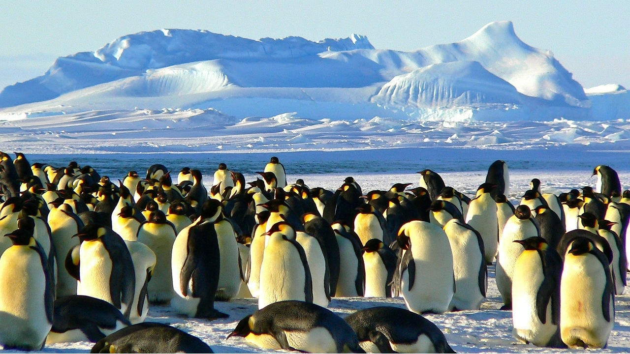 Mejores distribuciones GNU/Linux 2020