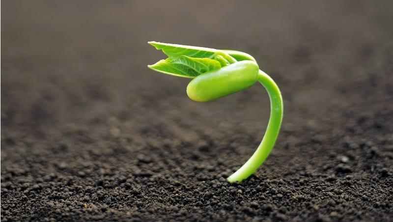 Semilla brotada con un pequeño tallo verde sobre un manto de tierra