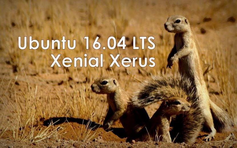 Ubuntu 16.04 LTS Xenial Xerus fondo